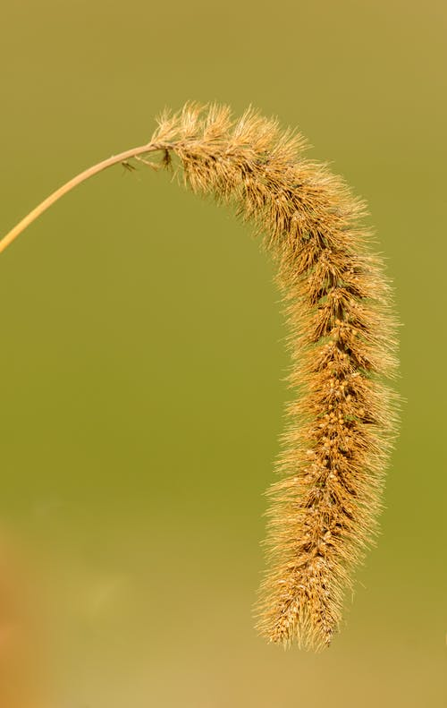 Ảnh lưu trữ miễn phí về cận cảnh, cánh đồng, cỏ, đẹp