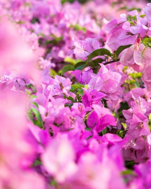 Photos gratuites de arbre, botanique, branche