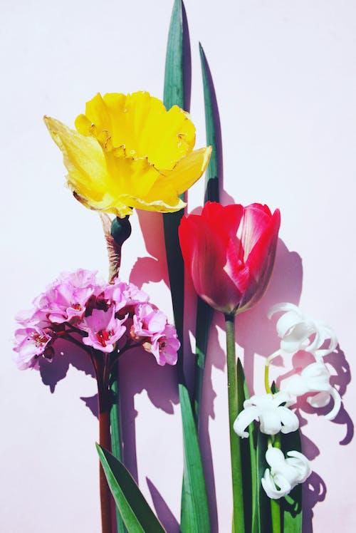 Photos gratuites de assorti, blanc, bouquet