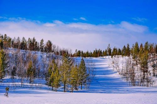 Foto d'estoc gratuïta de a l'aire lliure, arbres, cel blau