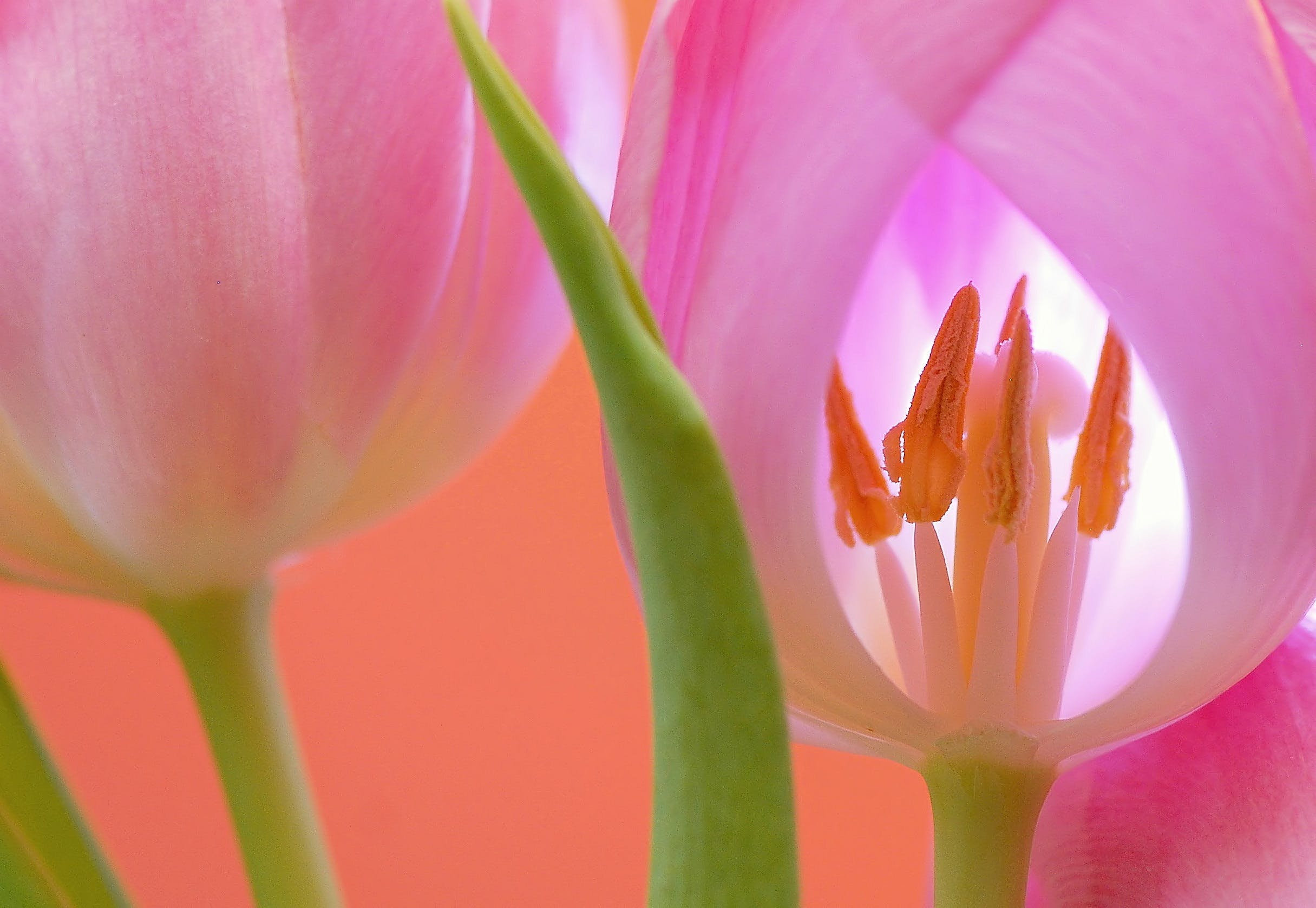 Free stock photo of nature, summer, garden, petals