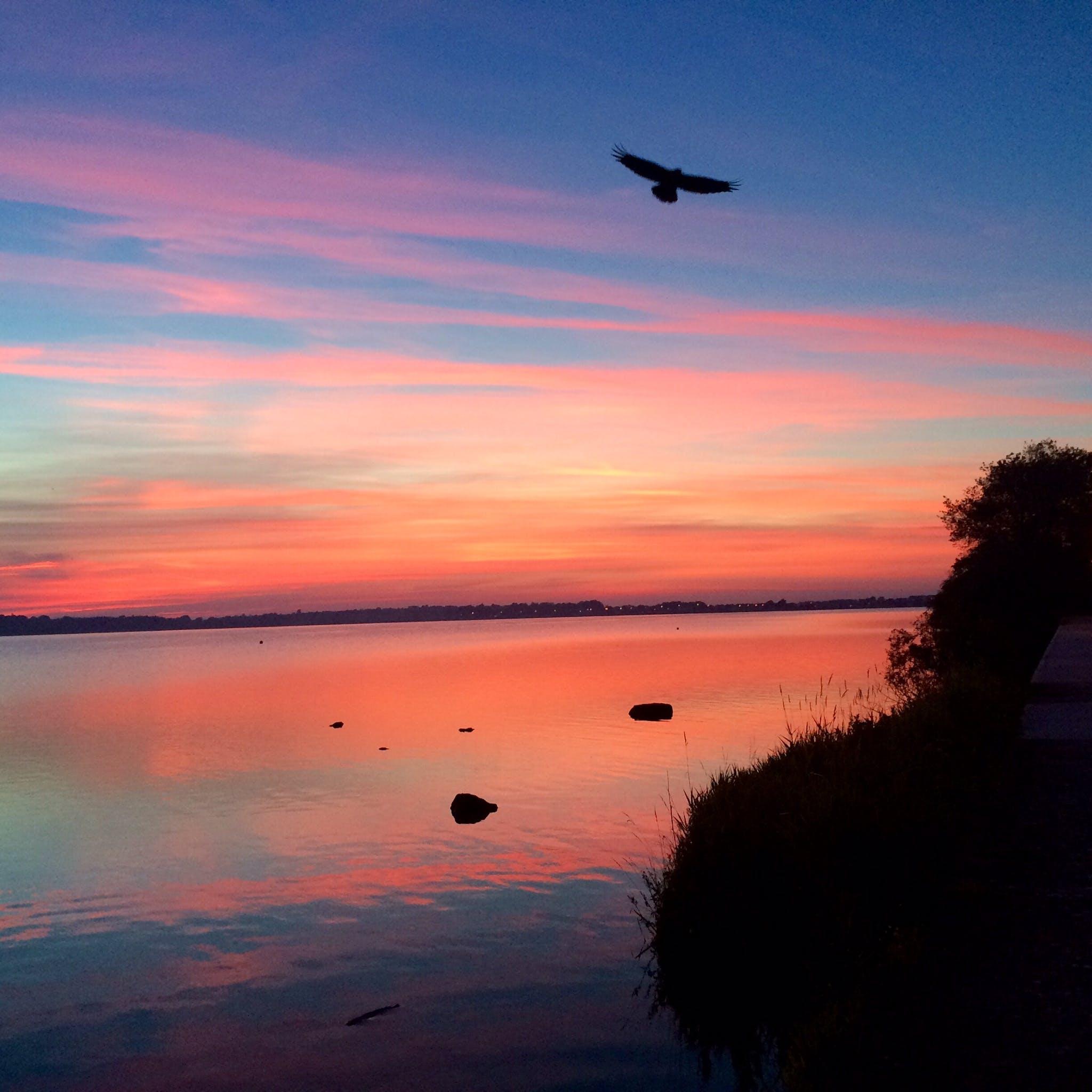 Free stock photo of sunset, bird, lake, Galway