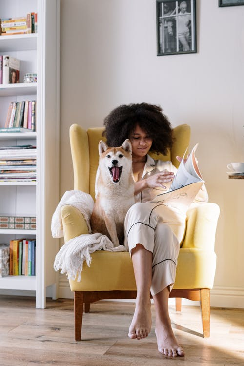 Free stock photo of afro, afro hair, animal, appartment