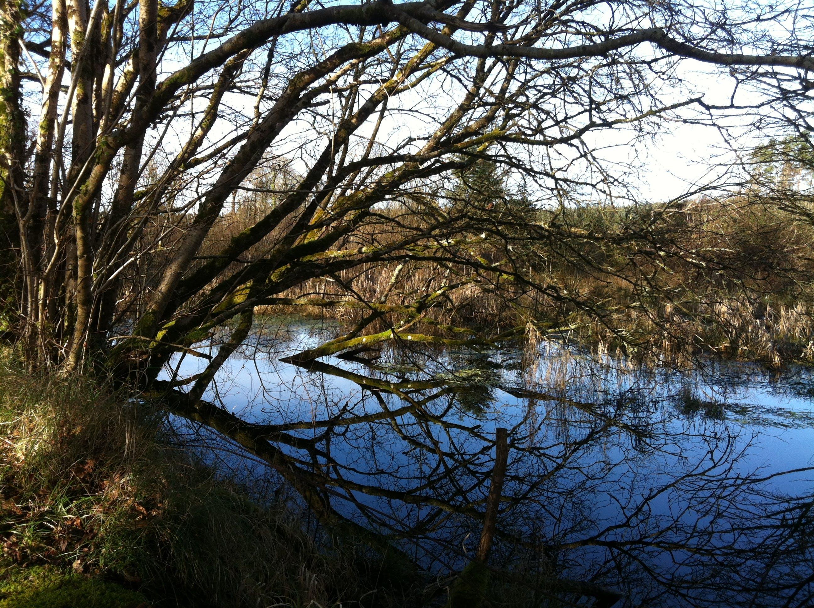 Free stock photo of Galway, ireland, lake, reflection