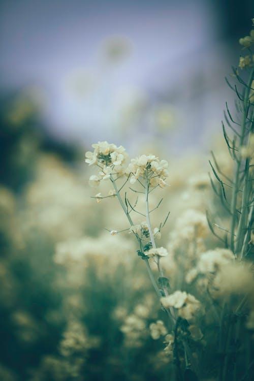 Blooming gentle white wildflowers in rural field