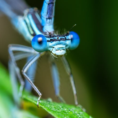Macro Photography Of Damselfly