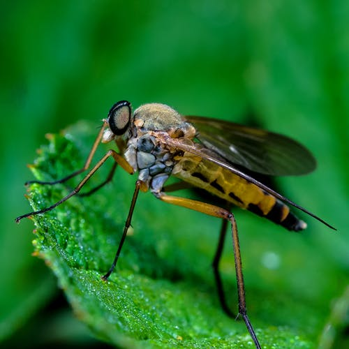 Black and Yellow Fly Perched on Green Leaf in Close Up Photography