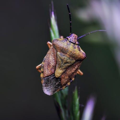 Macro Photography Of Beetle