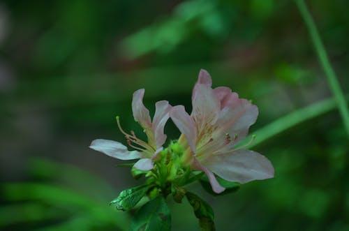Photos gratuites de botanique, fleur, flore, jardin