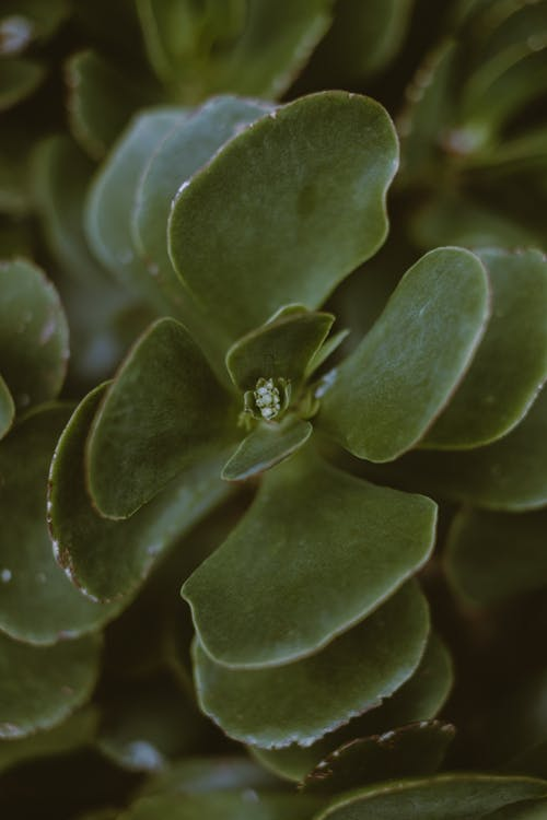 Close-Up Photo Of Succulent Plant
