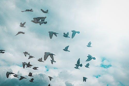 Free stock photo of 2020, 4k wallpaper, bird