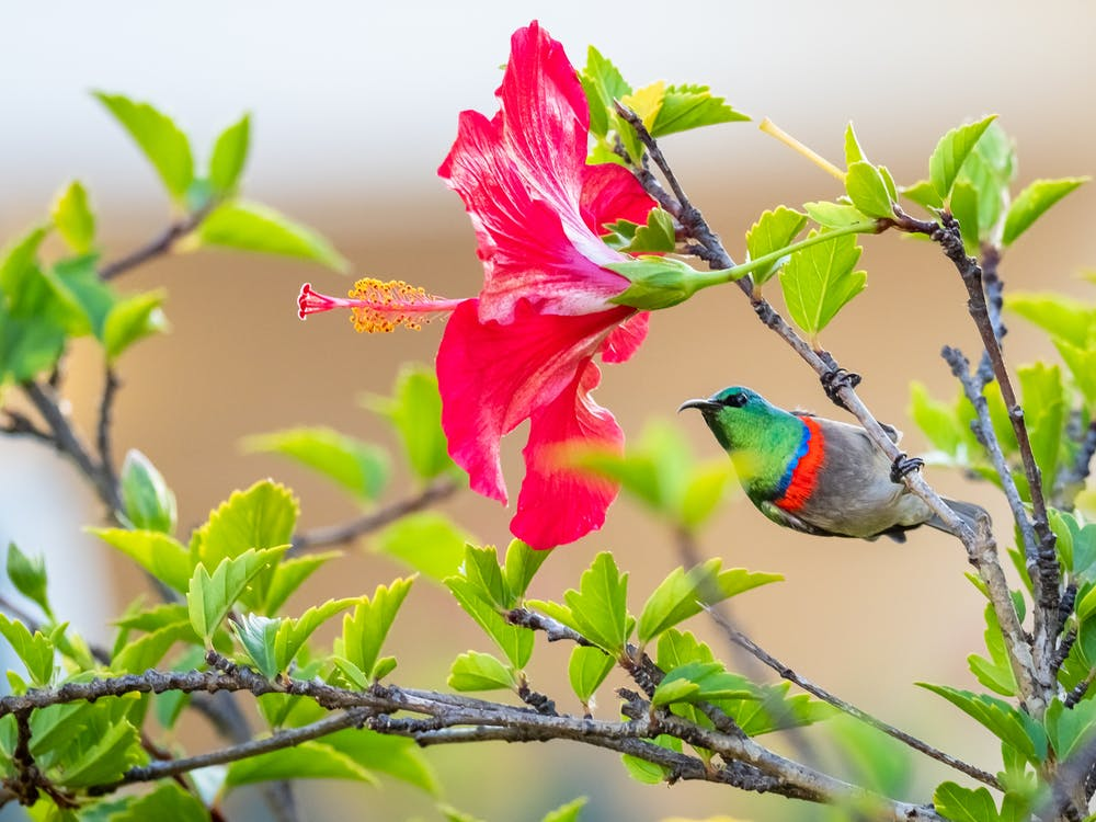 Red Blue and Green Bird on Tree Branch