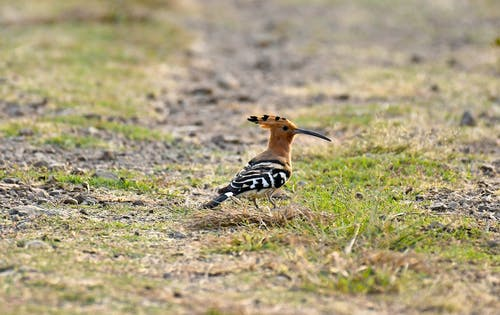Brown and Black Bird on Green Grass