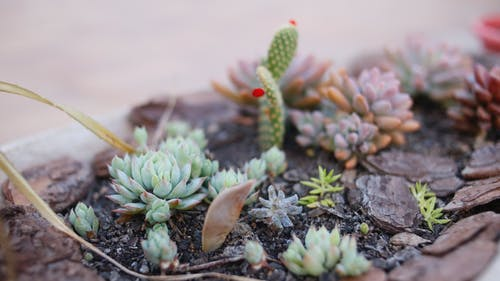 Green Succulent Plants on Brown Soil