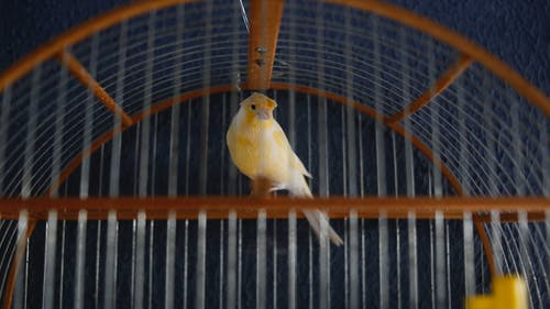 Yellow and White Bird in Cage