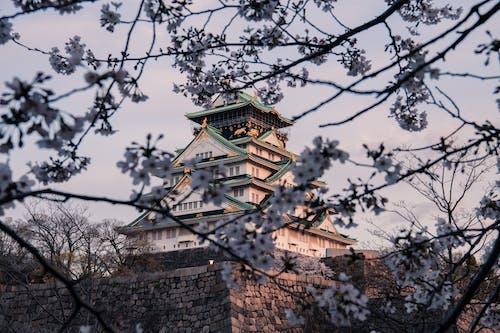 アジア建築, カルチャー, タワー, フラワーズの無料の写真素材