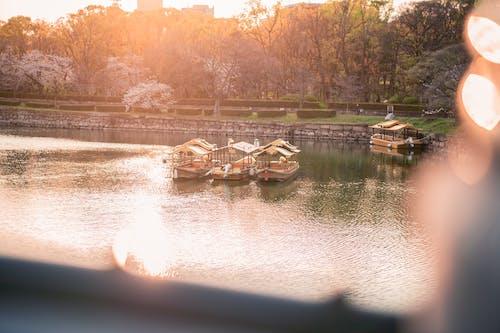 大阪, 大阪城, 春, 桜の花の無料の写真素材