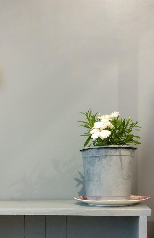 White Flowers in Bucket