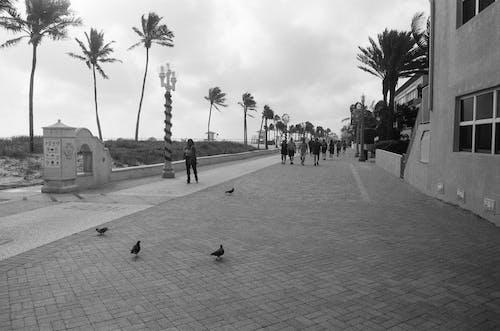 Free stock photo of beach, birds on boradwalk, boardwalk