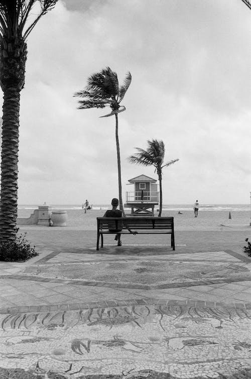Grayscale Photo of Bench Near Palm Tree