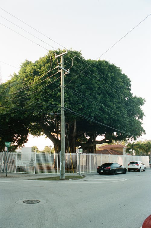 Free stock photo of big tree, leading lines, nature and powerlines