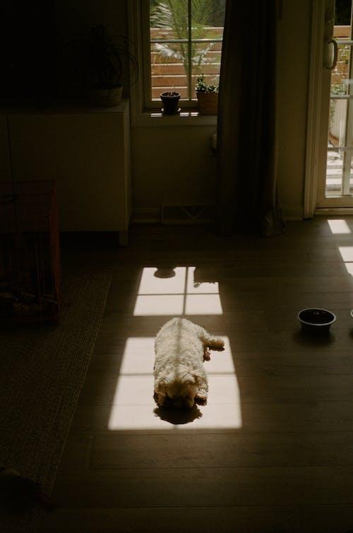 Free stock photo of dog, dogs, framing