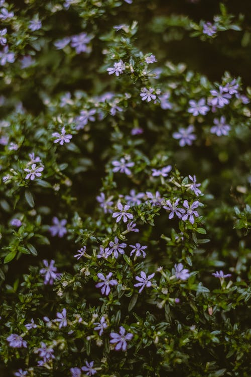 Purple Flowers and Green Leaves in Tilt Shift Lens