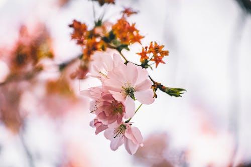 移轴镜头中的粉色和白色花朵