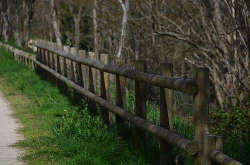 Photos gratuites de barrière, bois, chemin, loisirs