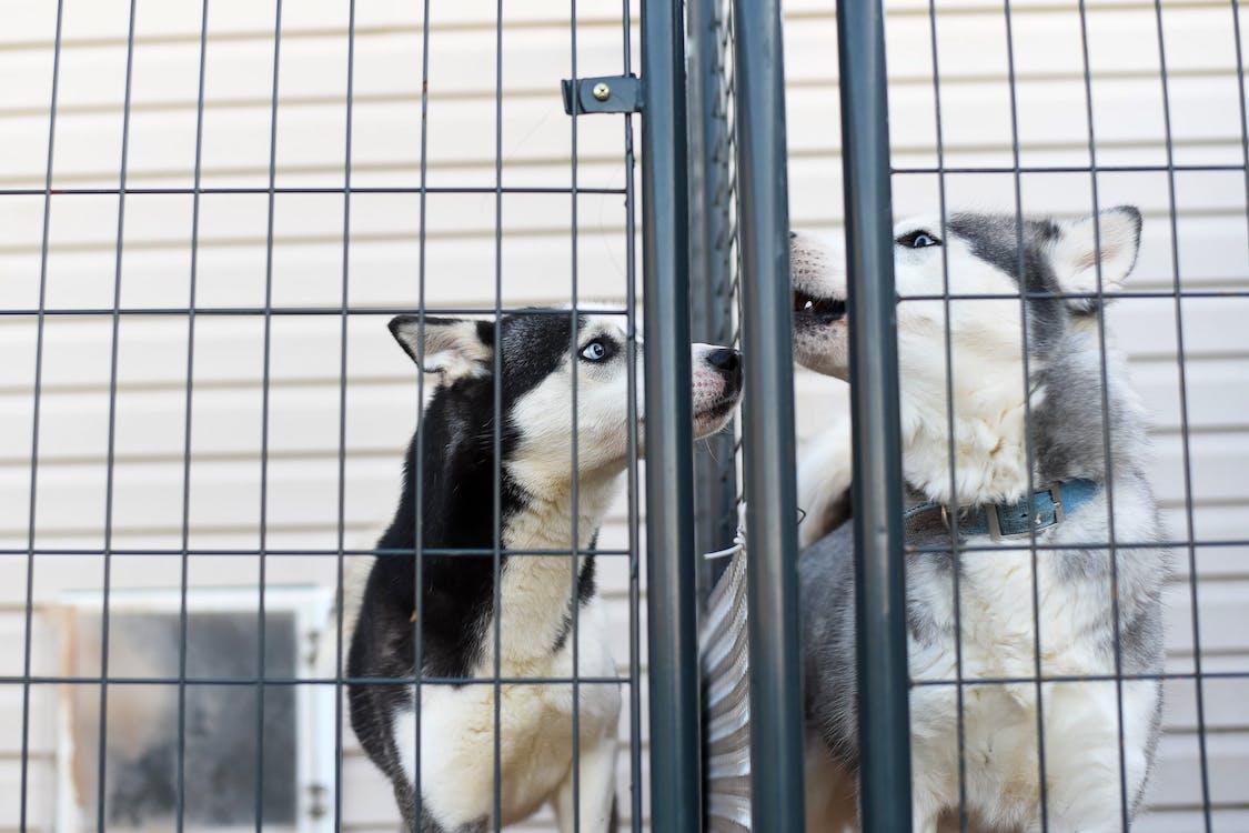 Purebred dogs in cage in veterinary clinic