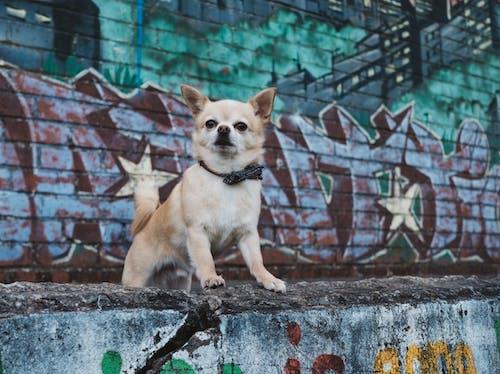 Бесплатное стоковое фото с городской, граффити, живопись, животное