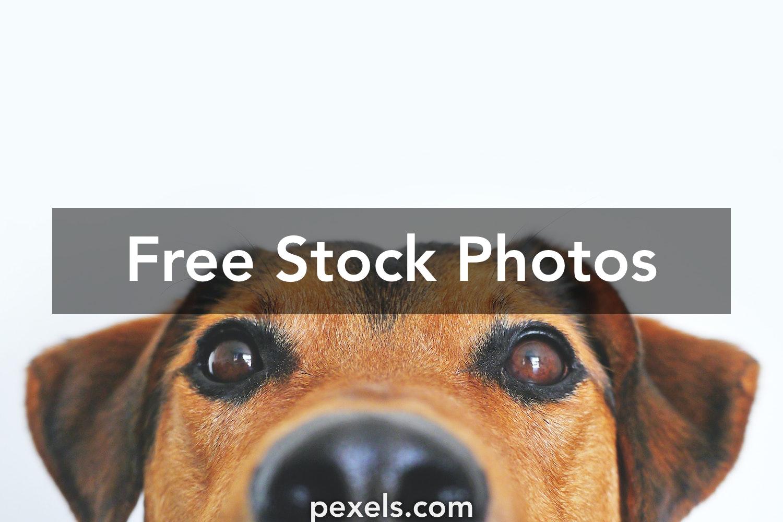 1000+ Great Pet Photos Pexels · Free Stock Photos