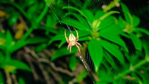 Ilmainen kuvapankkikuva tunnisteilla hämähäkki, luonto, makro, salama