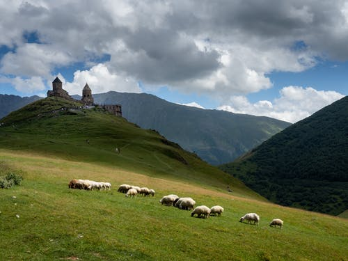White Sheep on Green Grass Field Near Mountain Under White Clouds