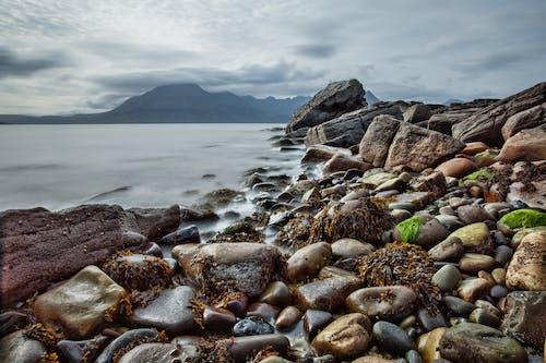 Photos gratuites de algues, bord de mer, cailloux, eau