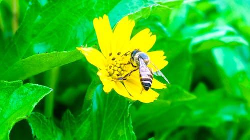 Ilmainen kuvapankkikuva tunnisteilla hiekkaranta, keltainen, makro, mehiläinen