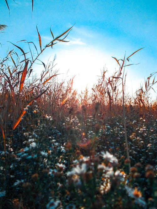 Free stock photo of #aperture, #fields, #flowerphotography, #flowers
