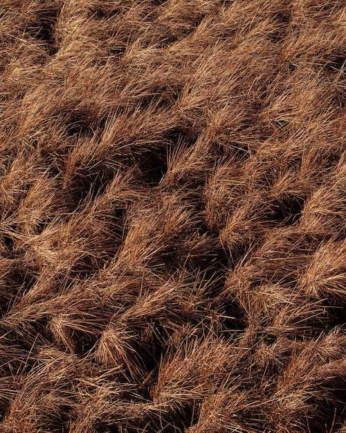 Бесплатное стоковое фото с золотой, коричневый, на открытом воздухе, поле