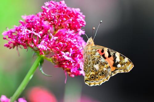 Immagine gratuita di farfalla