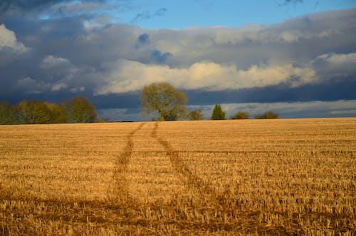 Immagine gratuita di azienda agricola, fattoria