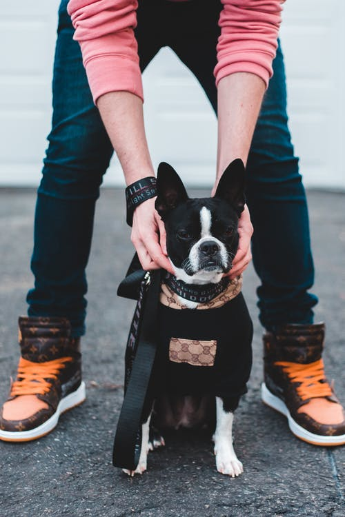 Crop owner petting dog on street