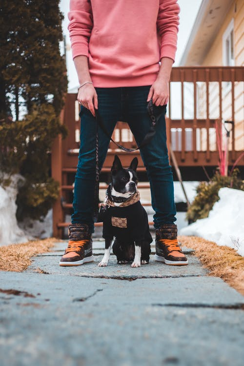 Man in Pink Long Sleeve Shirt and Denim Pants Holding Black and White Short Coat Dog