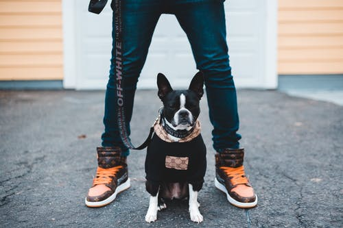 Person in Blue Denim Jeans and Brown Sneakers Holding Black and White Short Coated Dog