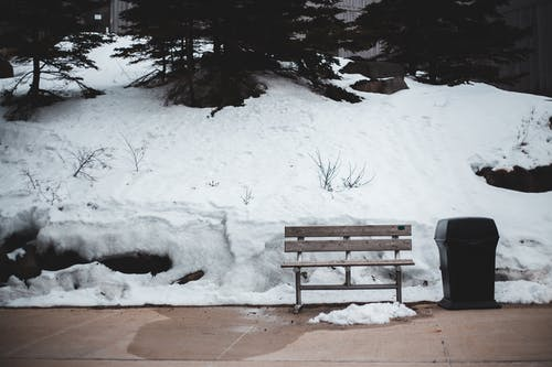 Lonely bench and bin in winter park
