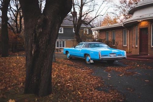 Blue Chevrolet Camaro Parked Beside Brown Tree