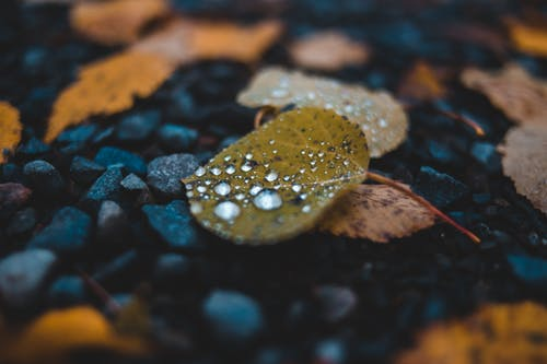 Water Droplets on Brown Leaf