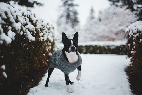 Black and White Dog on Snow Covered Ground