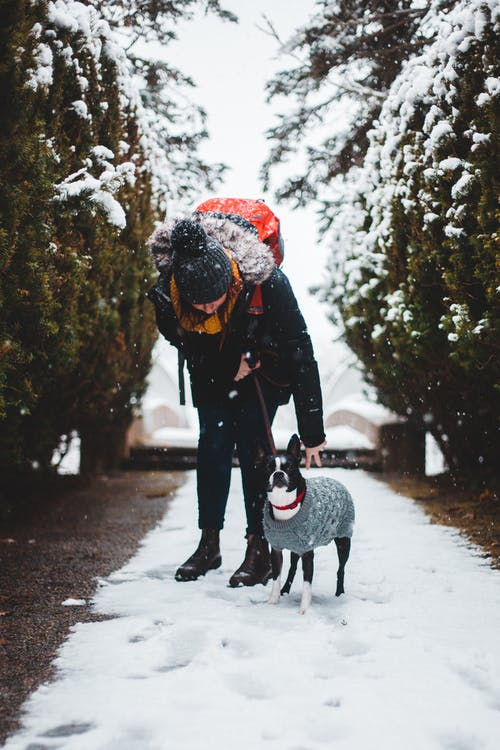 Woman in Black Jacket Holding Black Short Coated Dog on Snow Covered Ground