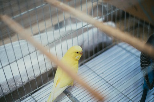 Foto profissional grátis de amarelo, animais selvagens, animal, animal de estimação