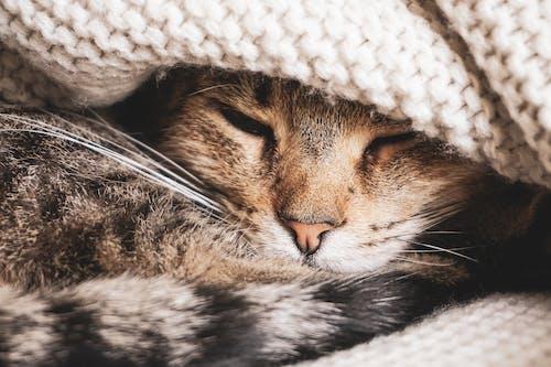 çizgi, çok sevimli, çok tatlı, Evcil Hayvan içeren Ücretsiz stok fotoğraf